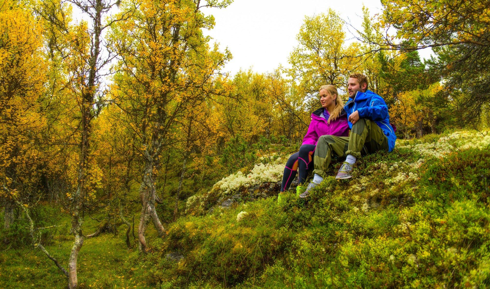 Norsk skog på høsten